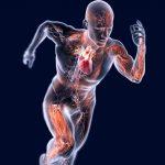 corso – Approfondimenti di Fisiologia Umana
