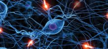 corso – Neuroscienze